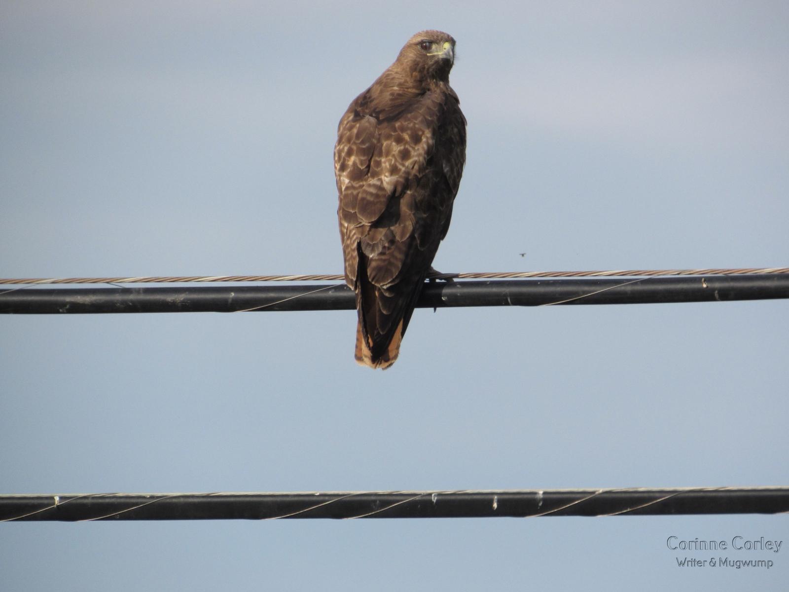 bird-looking-at-me