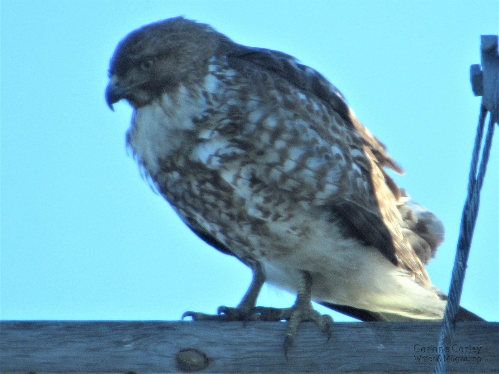 Bird-overhead