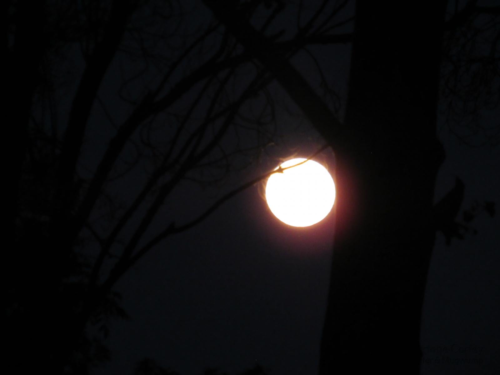 Pink-Moon-Overglow