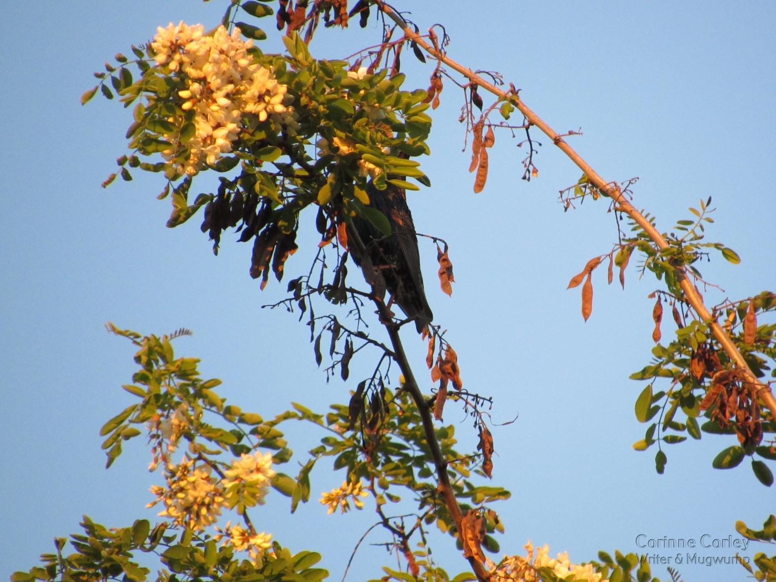 Shy-bird-in-a-treetop
