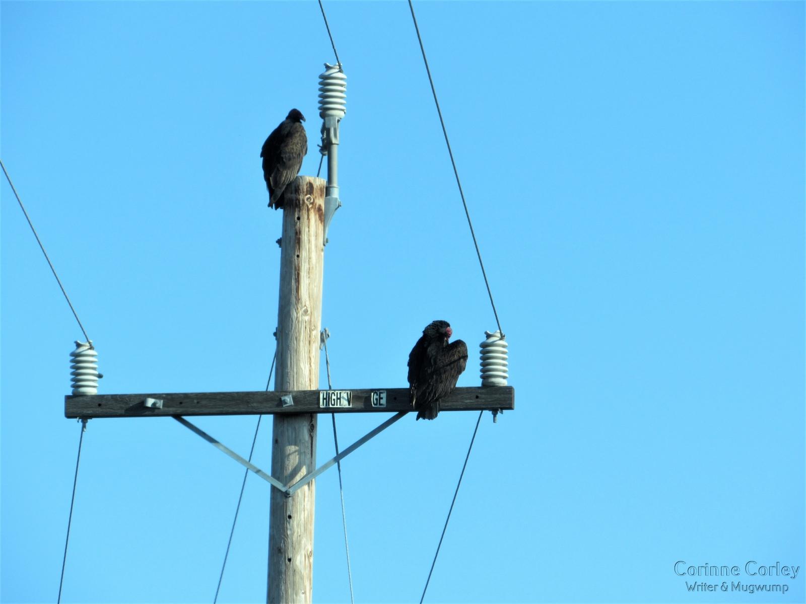 Morning-watchers