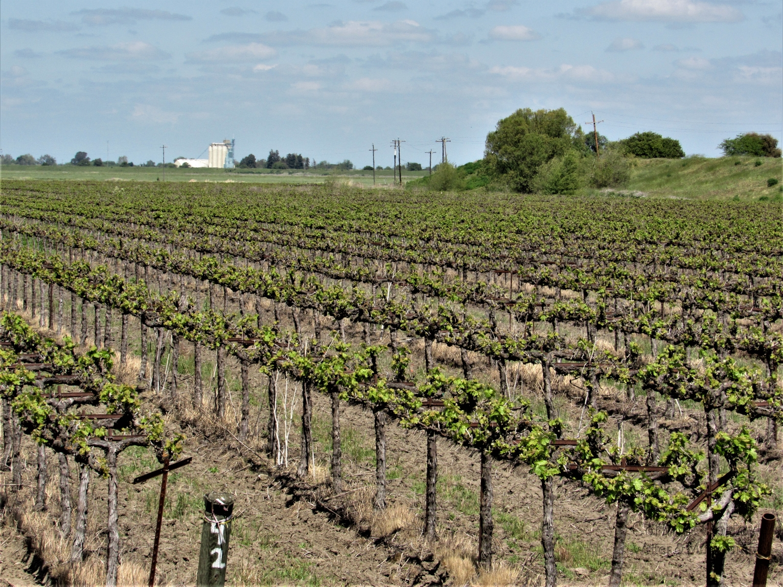 1_Spring-vineyard