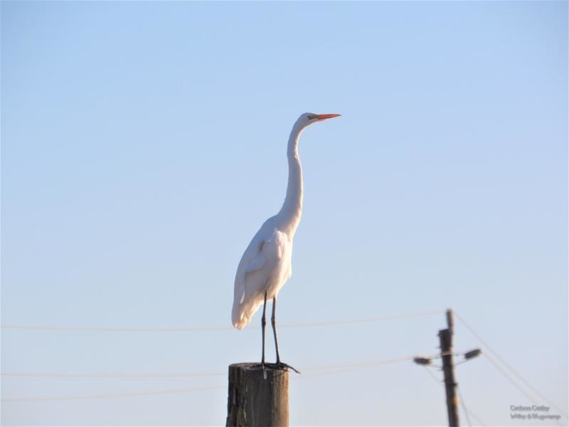 Standing-tall-on-Andrus-Island-800x600