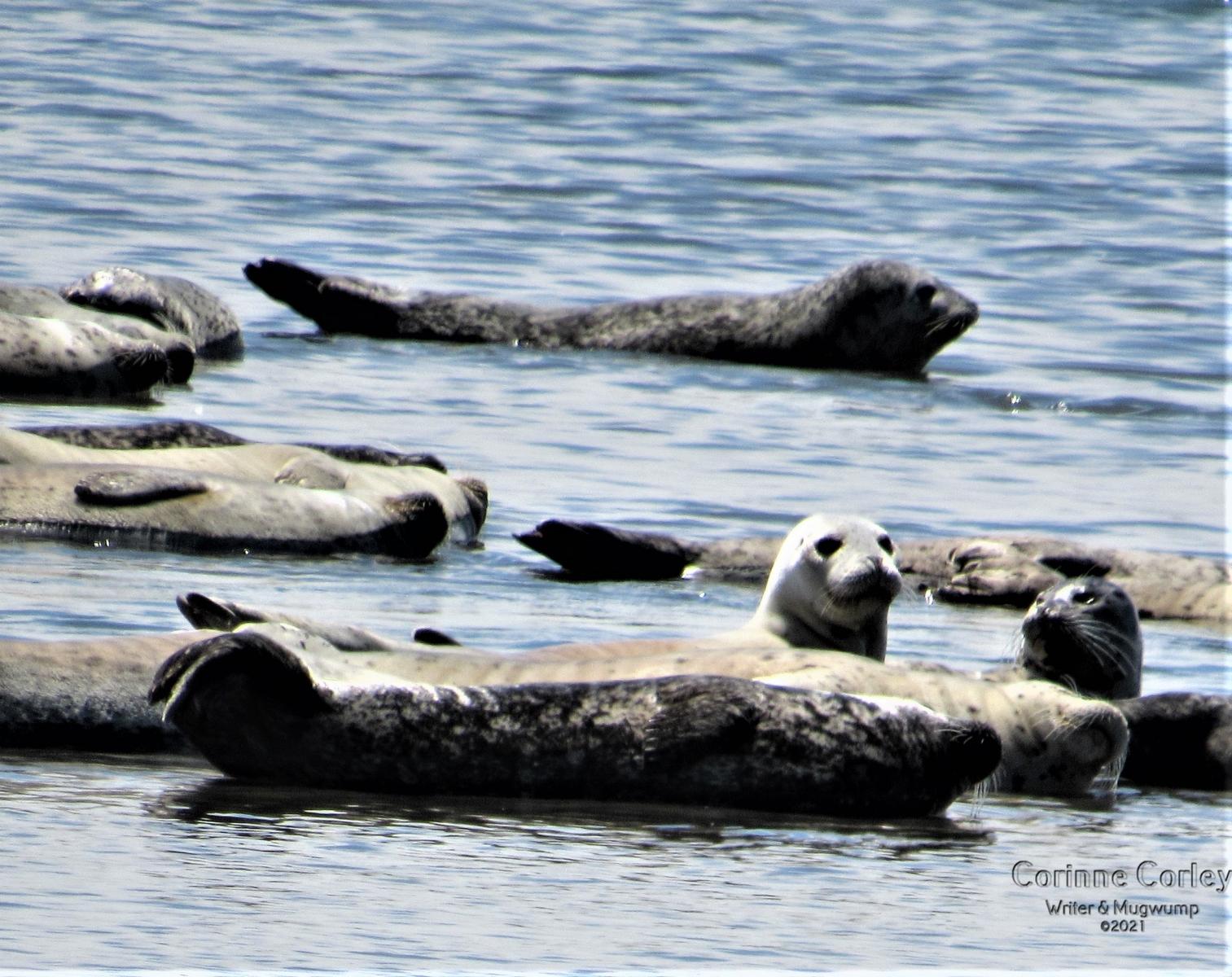 Seals-1