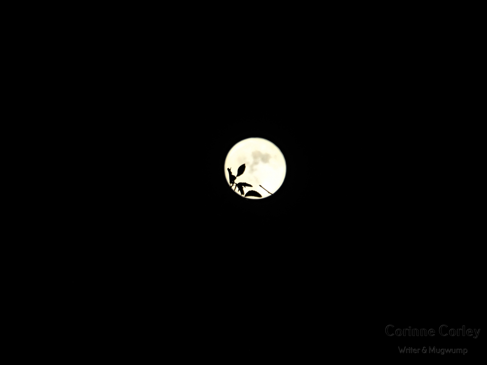 Blue-moon-8