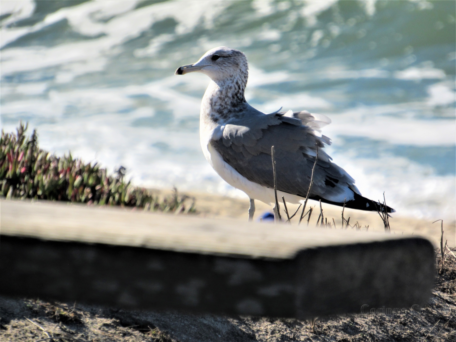 Gull on the bench