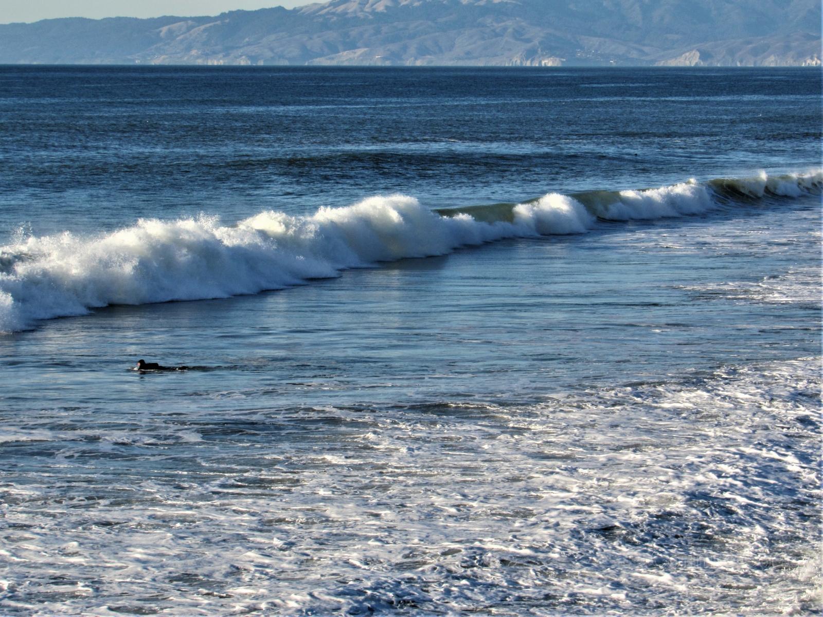 Pacifica swimmer