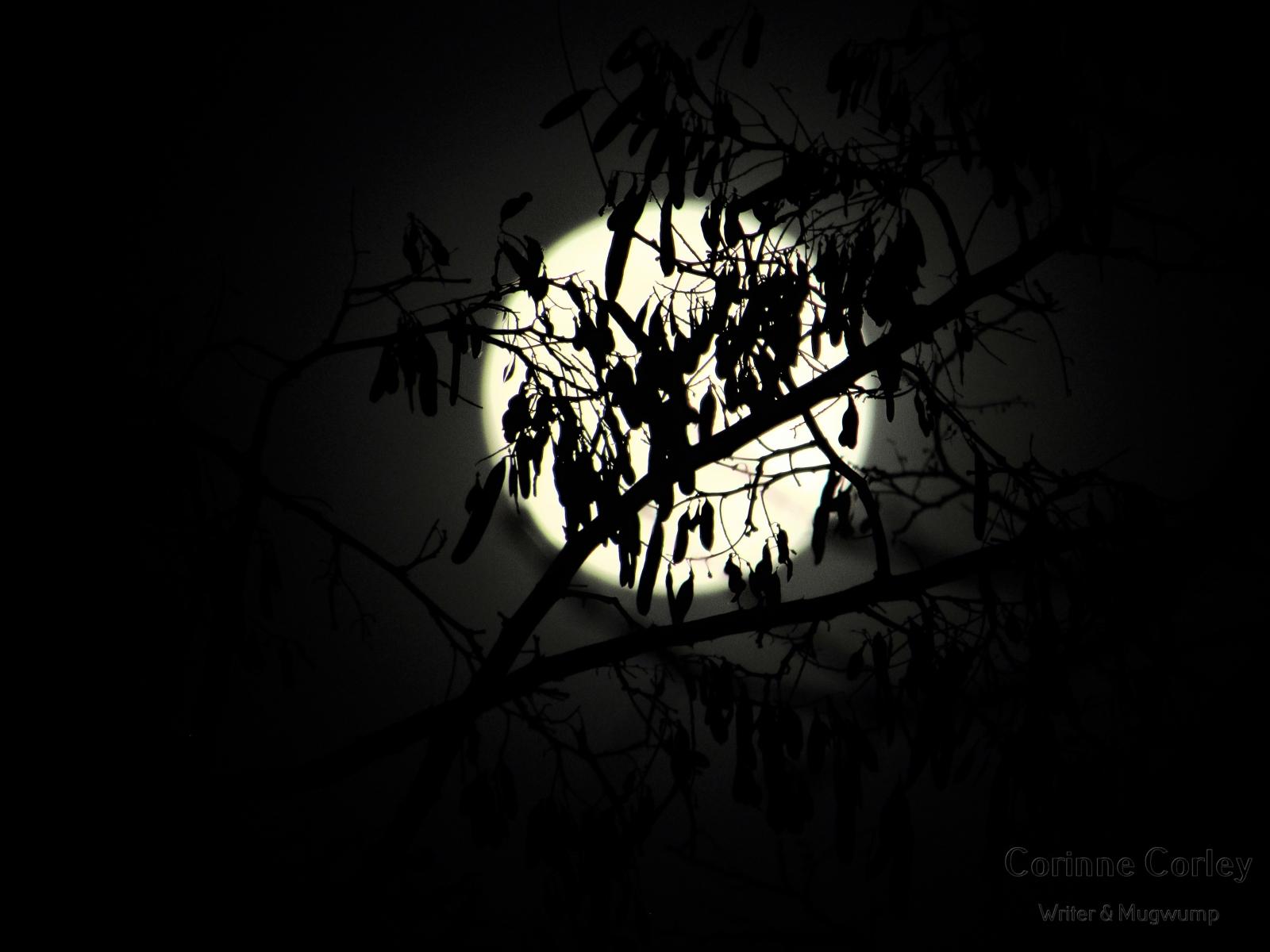 Dec-Moon-6