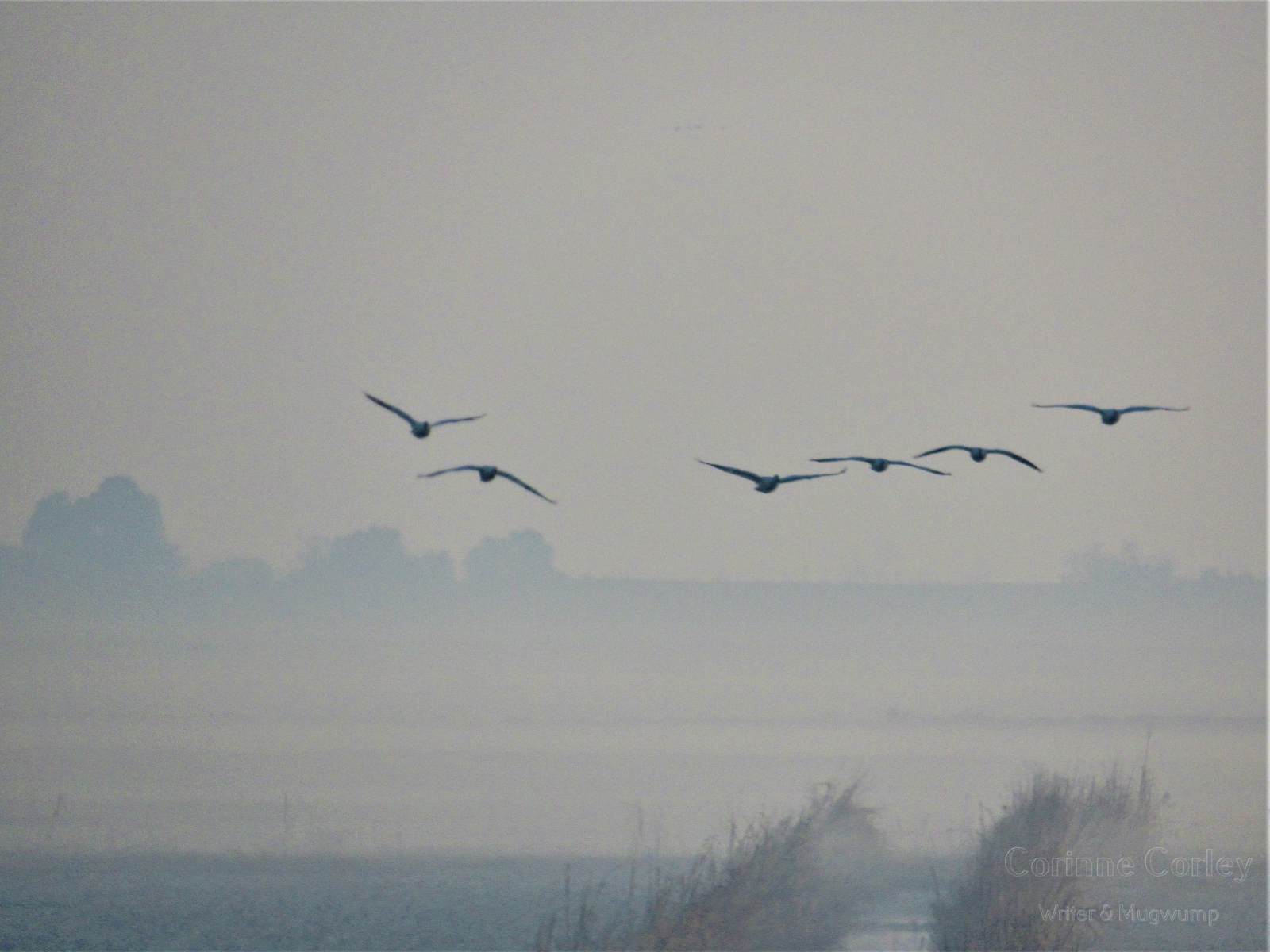 Fog-on-Andrus-Island-Copy-Copy