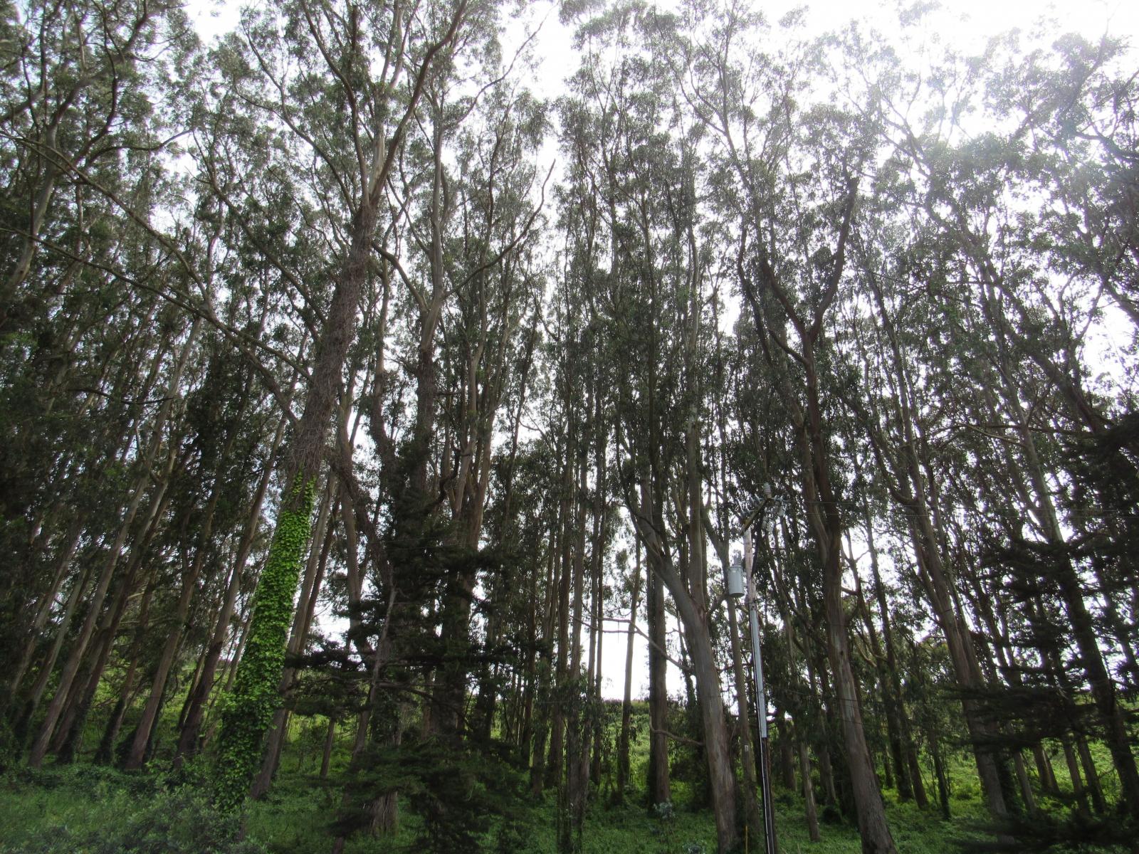 Treesinlight2