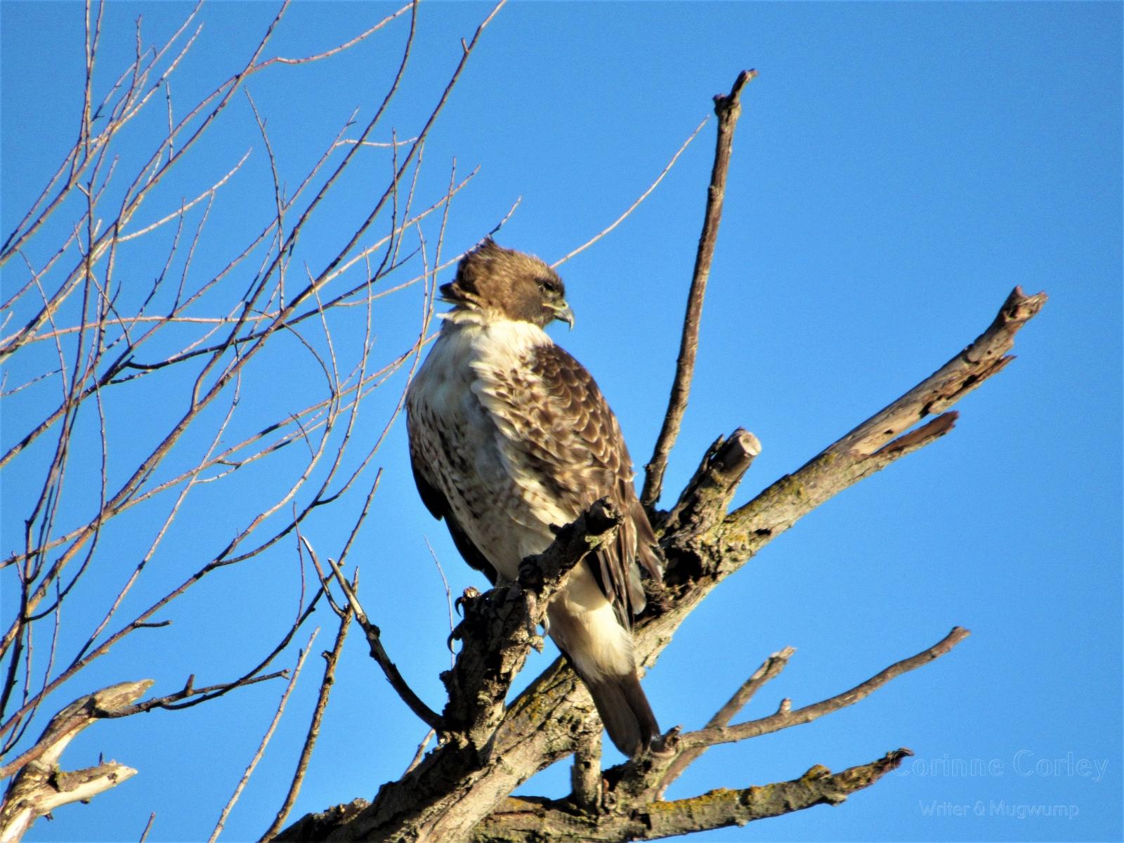 Hawks-beak-against-the-sky