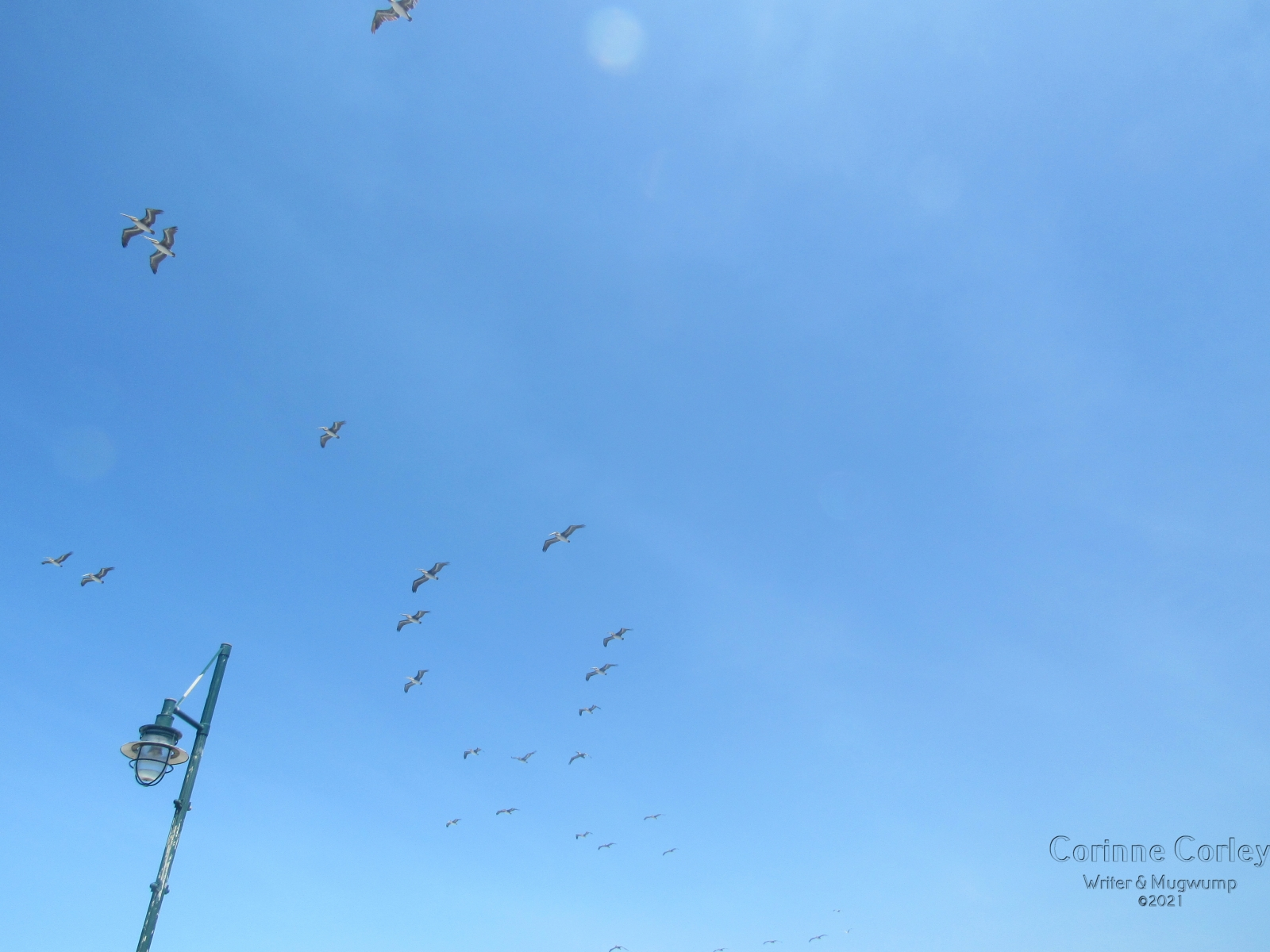 gulls-and-lampost-2