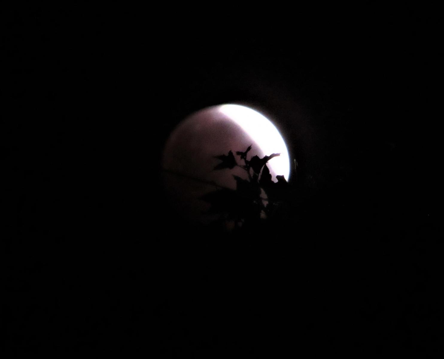 May-Full-Moon-33