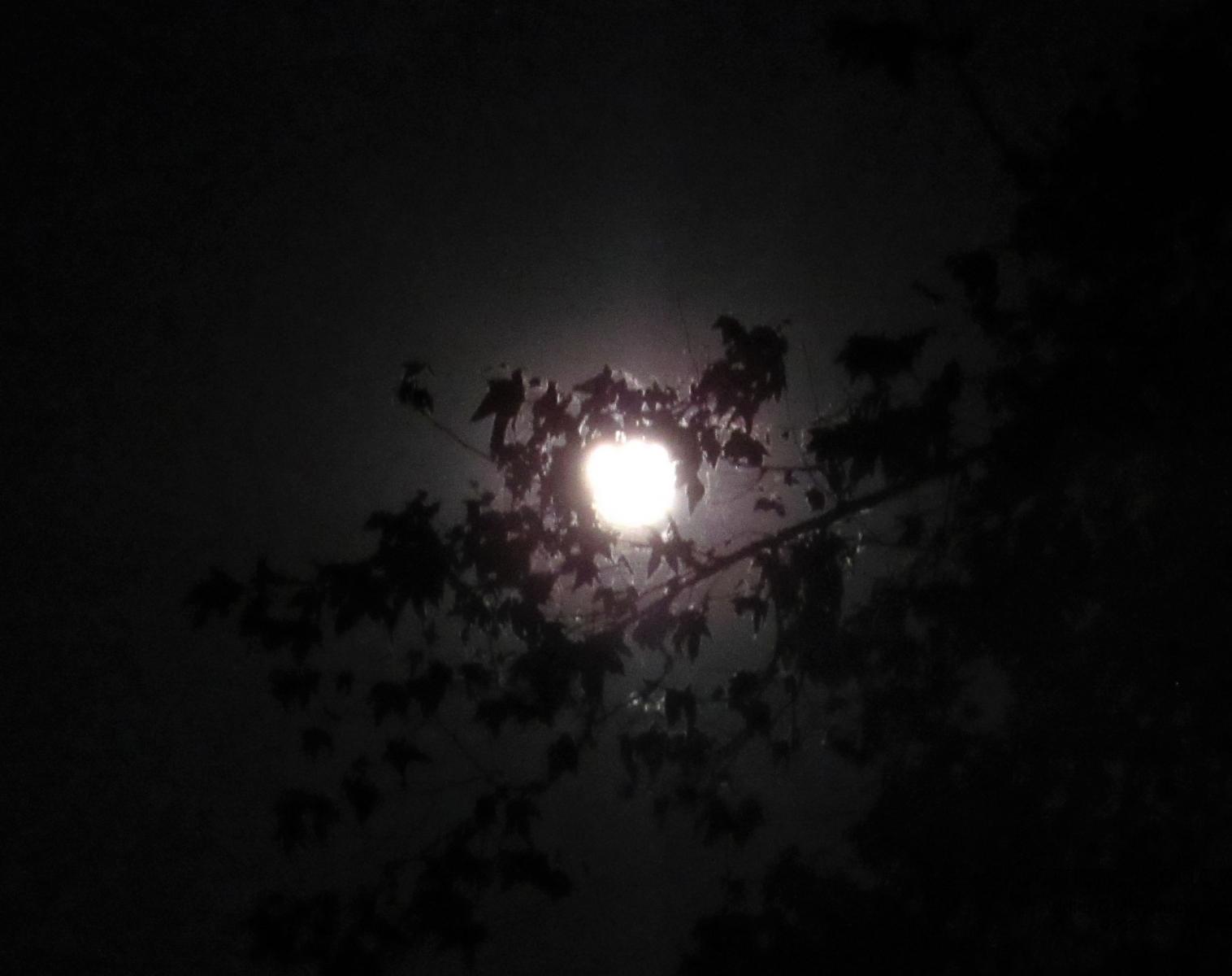 May-Full-Moon-1