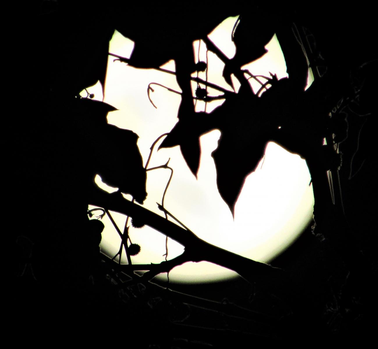 May-Full-Moon-2