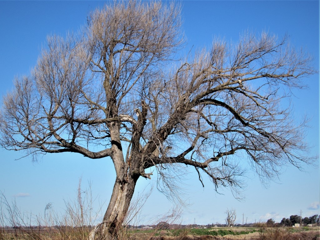 In-the-old-tree-Medium
