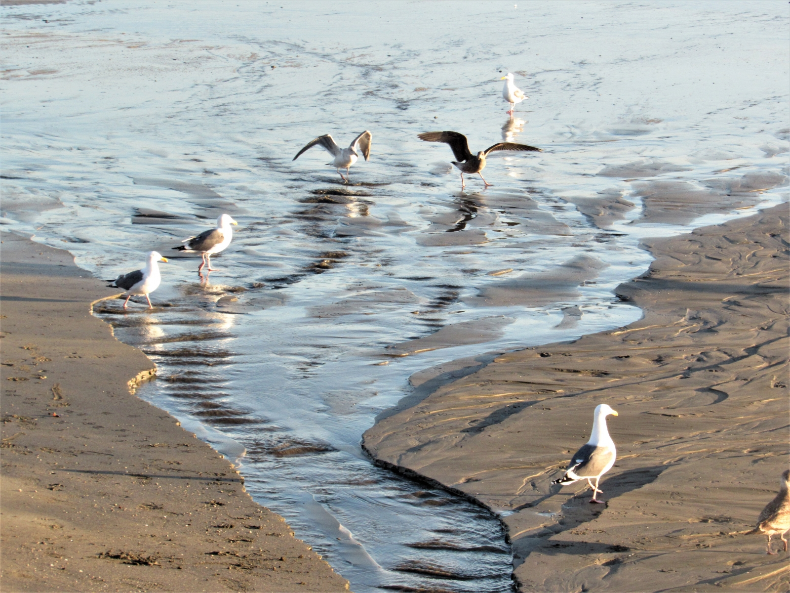 Gulls-at-the-point