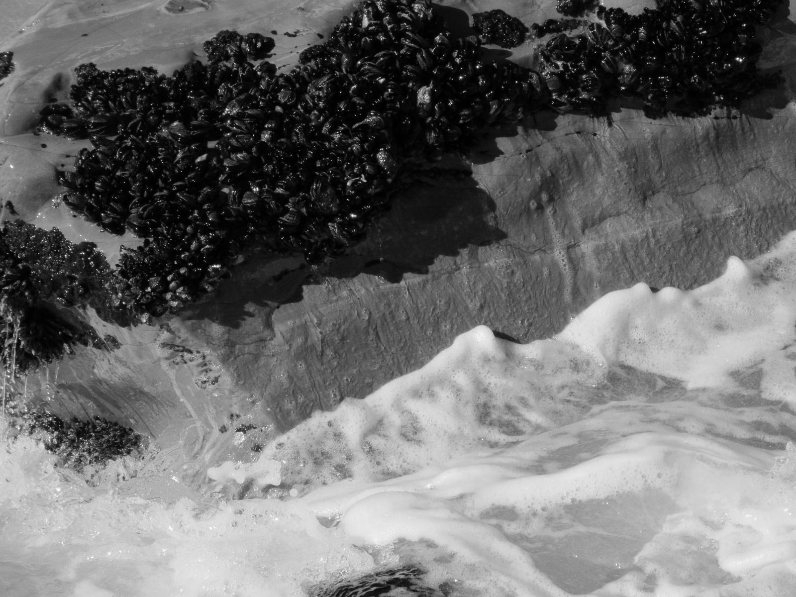 Waves-BW