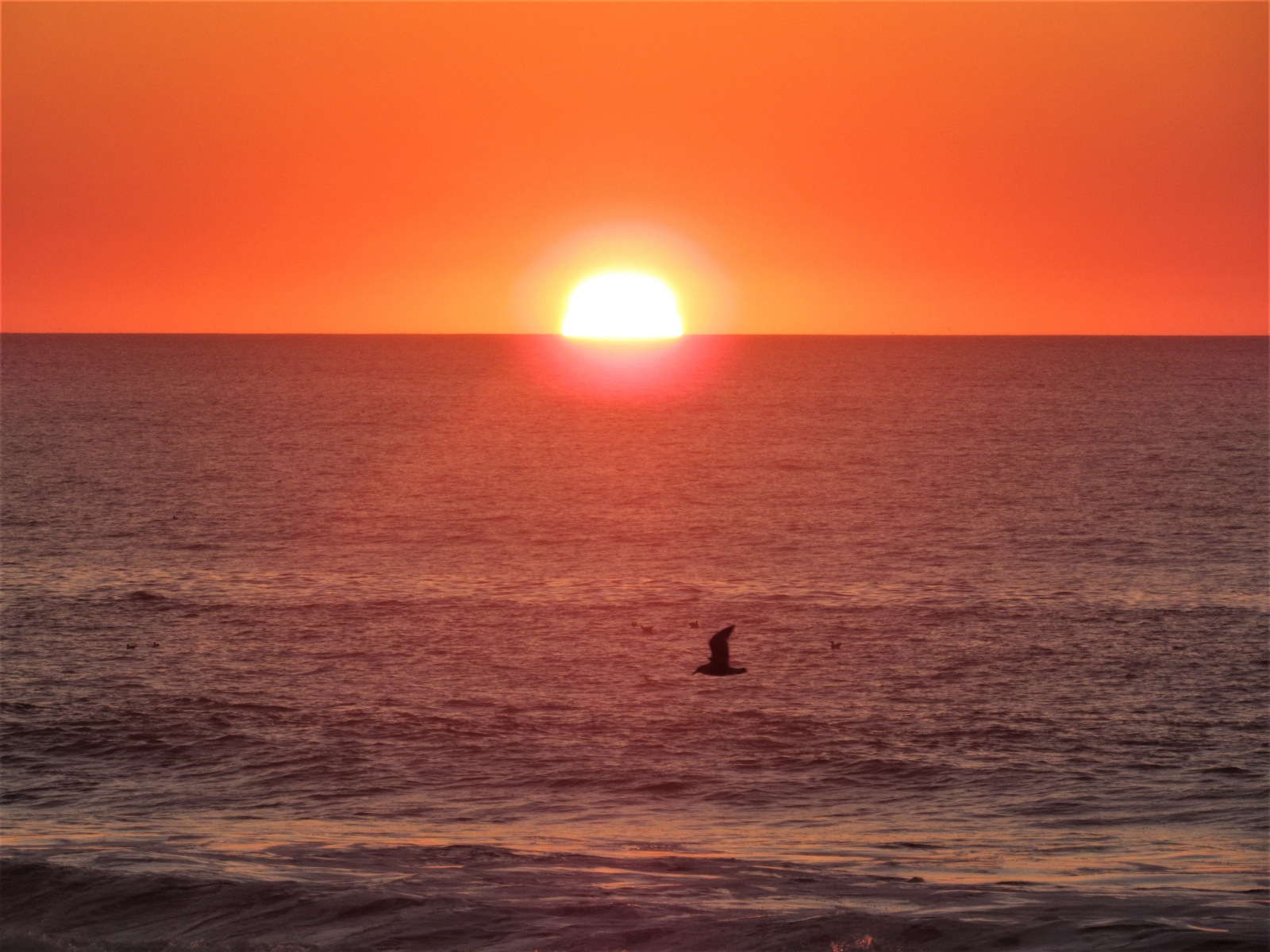 sea-and-gull