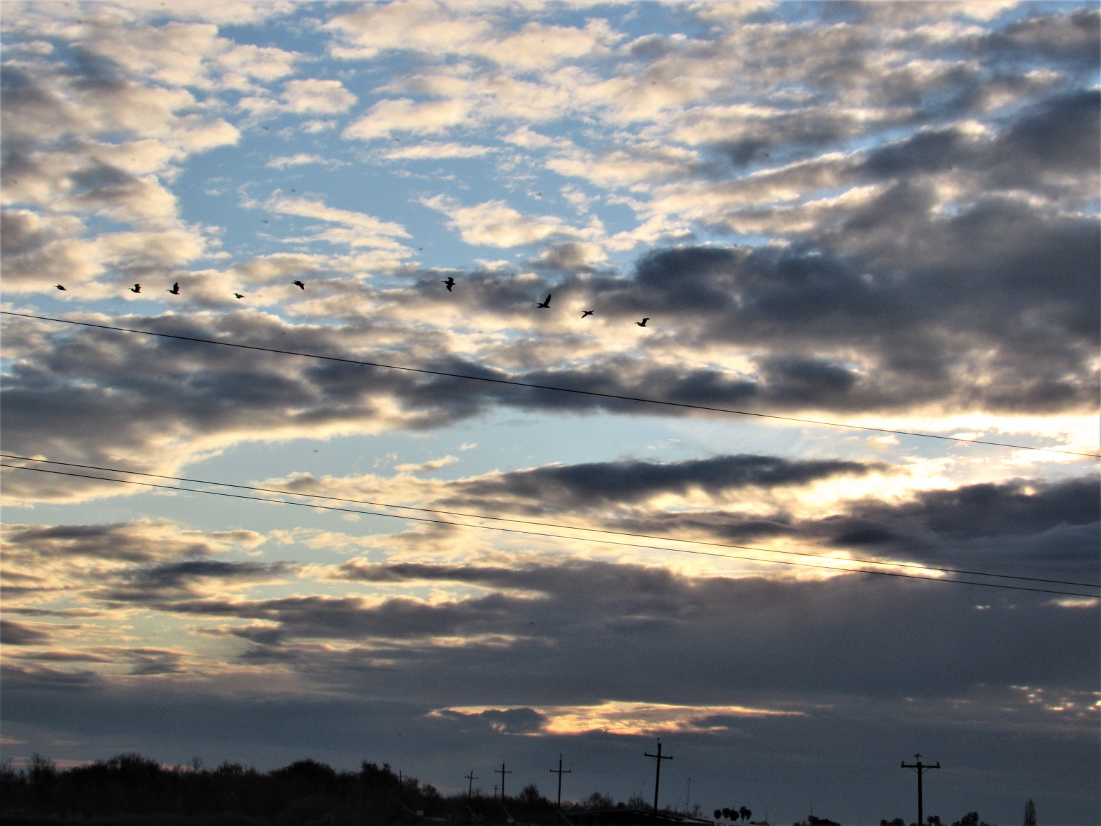 Birds-in-the-morning-sky