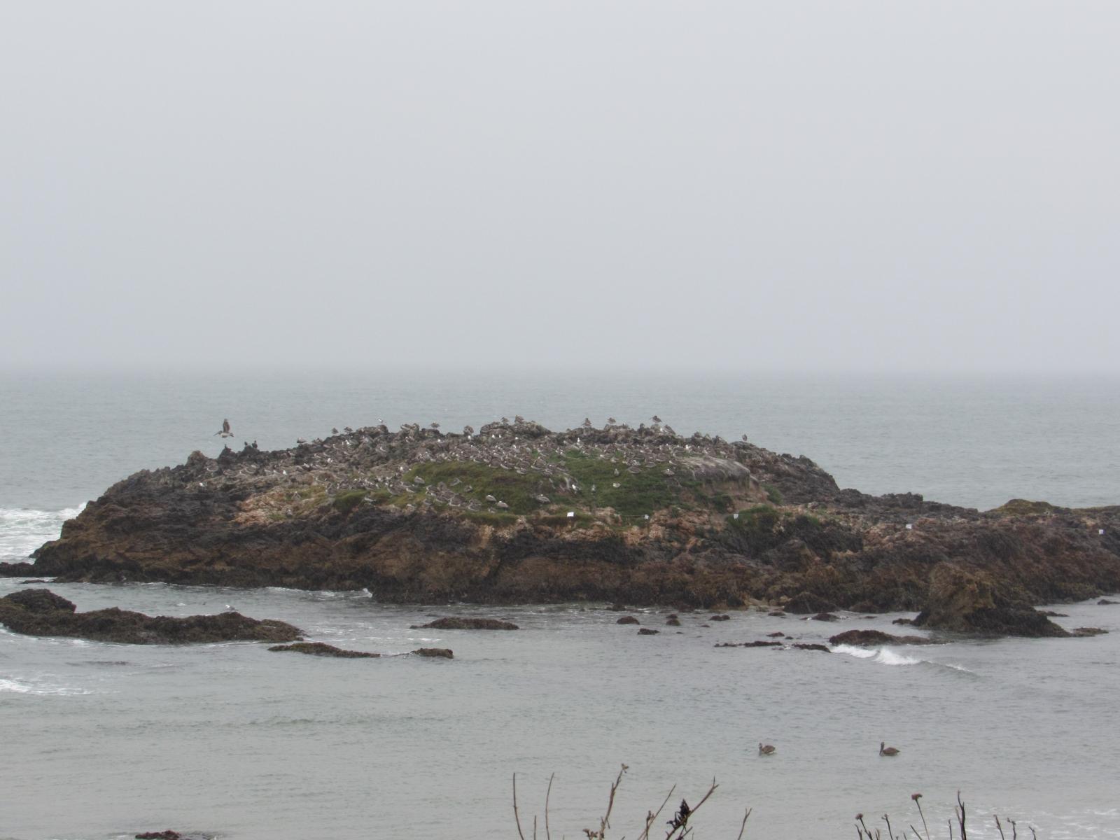 Pescadero-island