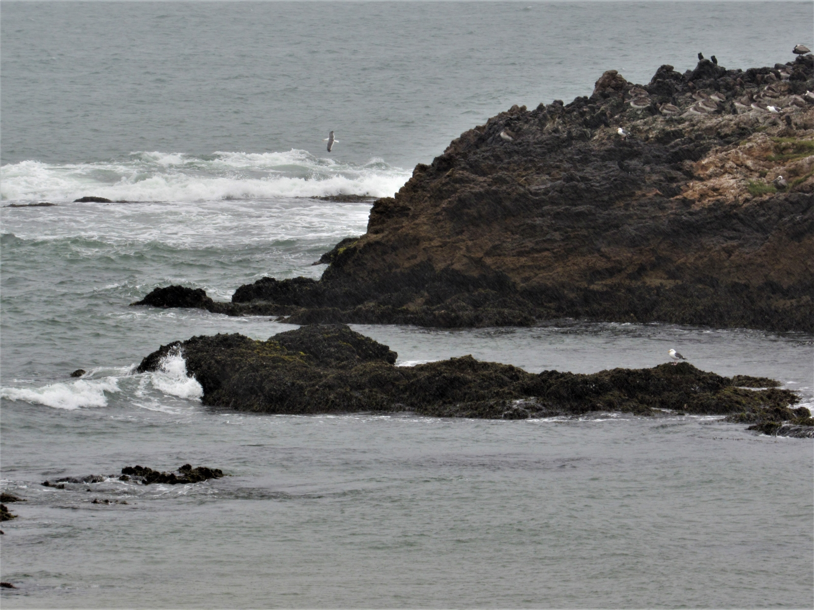 Pescadero-seaside