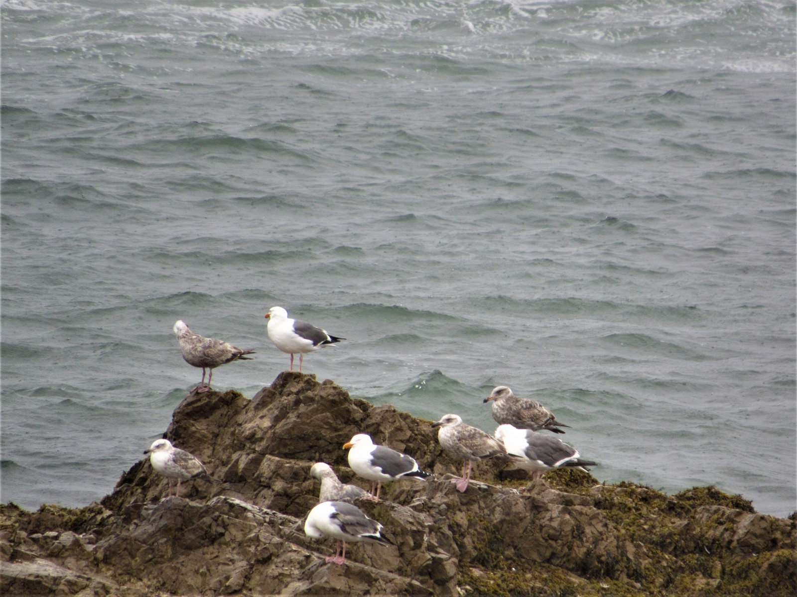 Sea-and-gulls