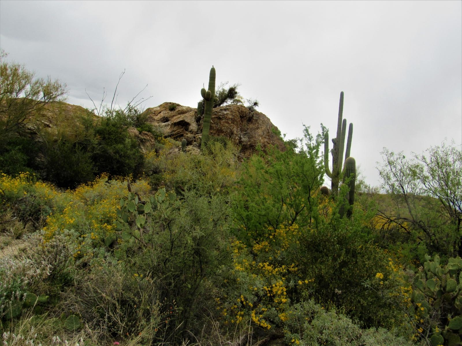 Saguaro-East-1