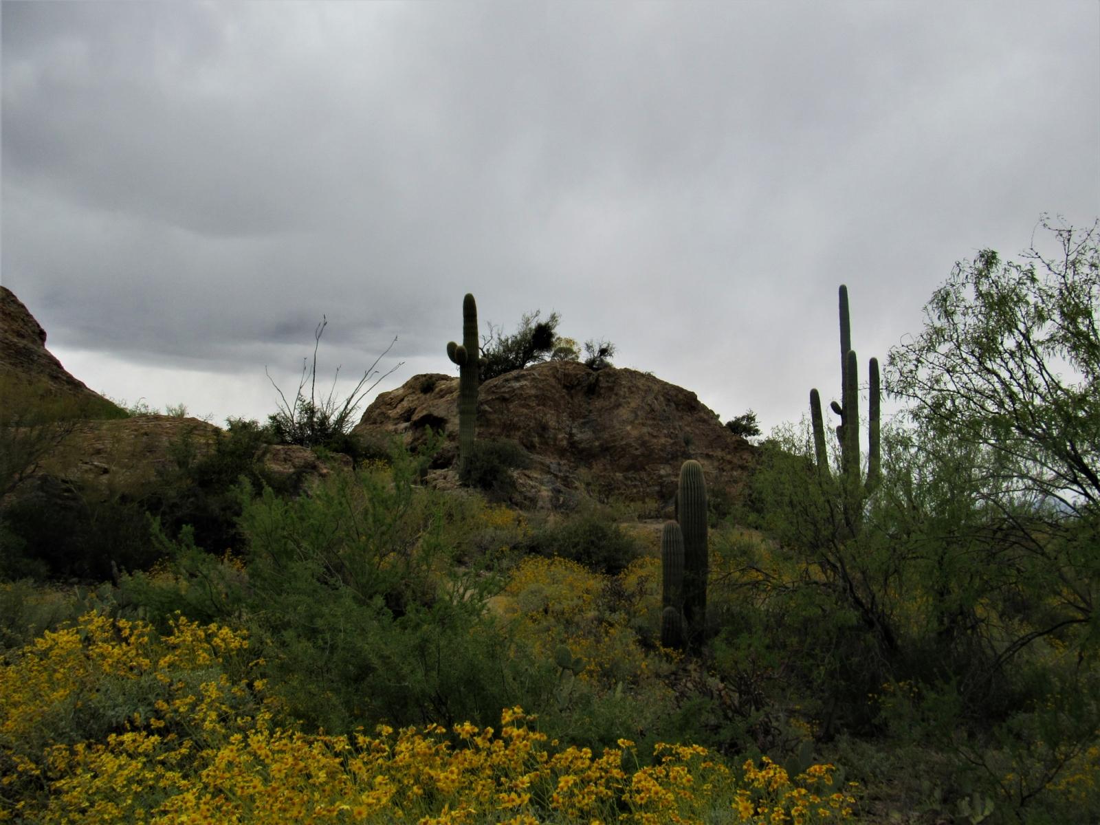 Saguaro-East-2