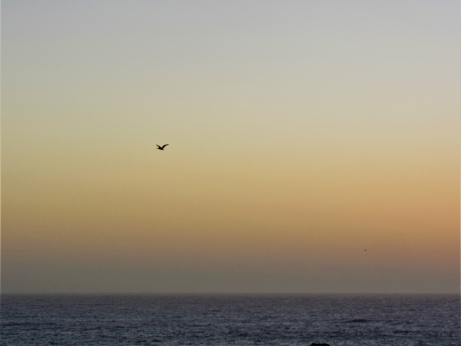 Gull-at-sunset