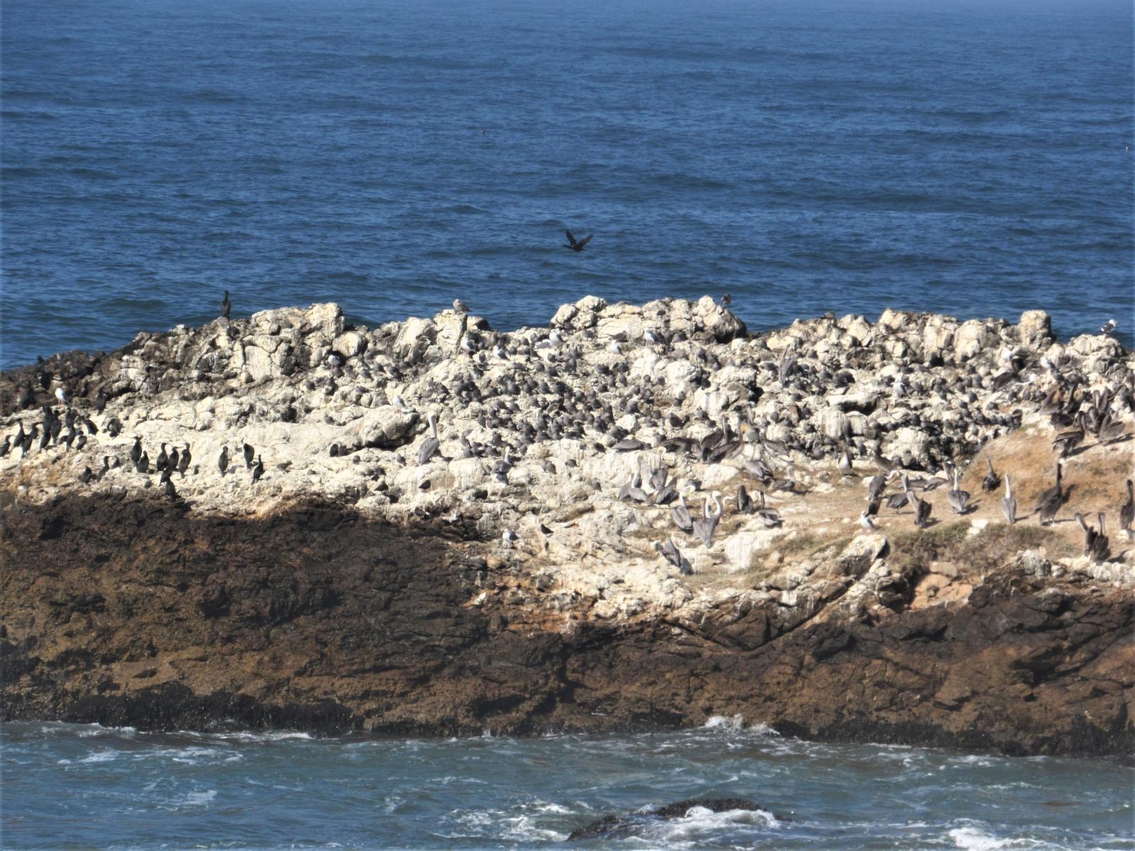 Pelican-island