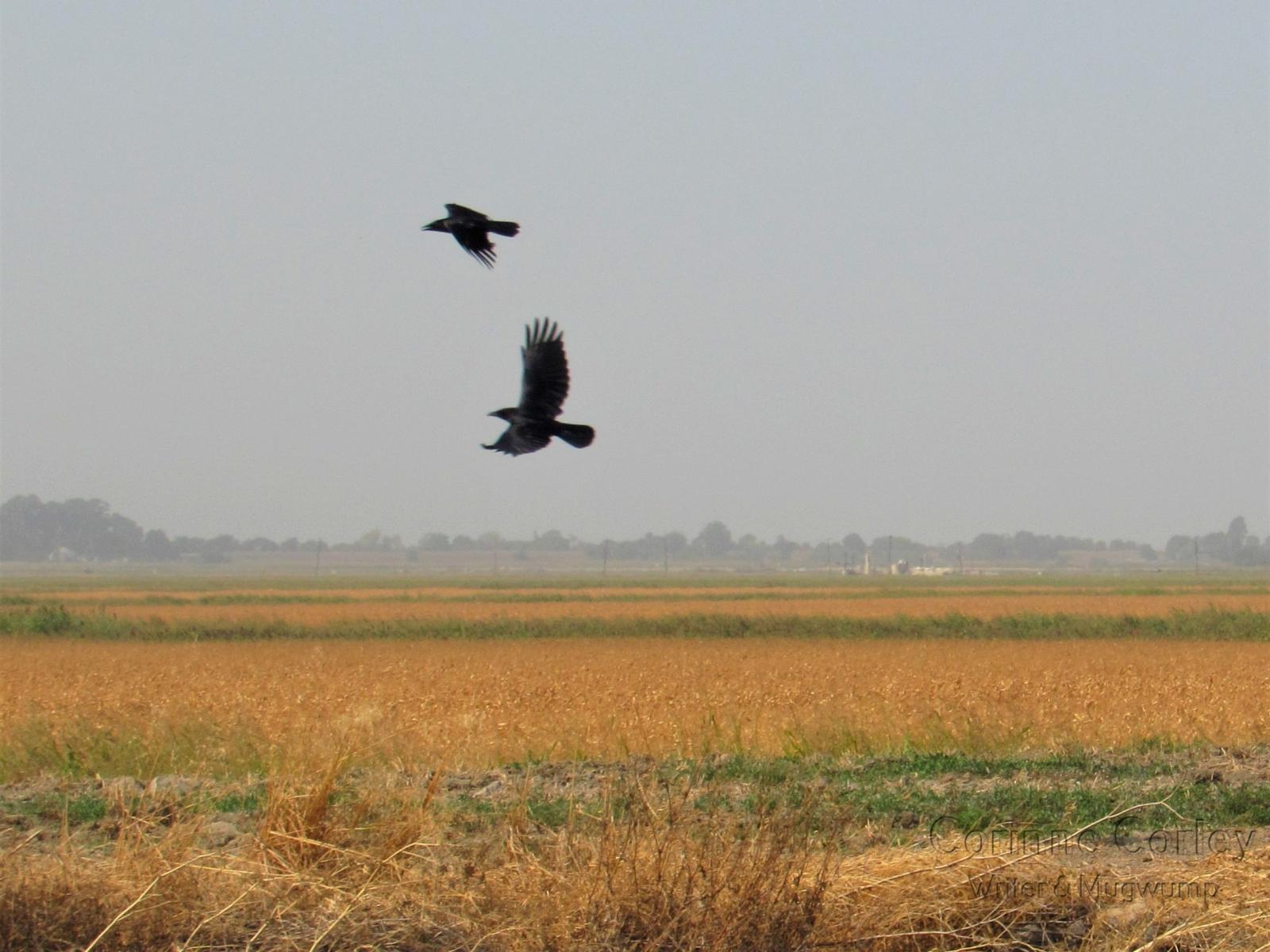 Field-flight