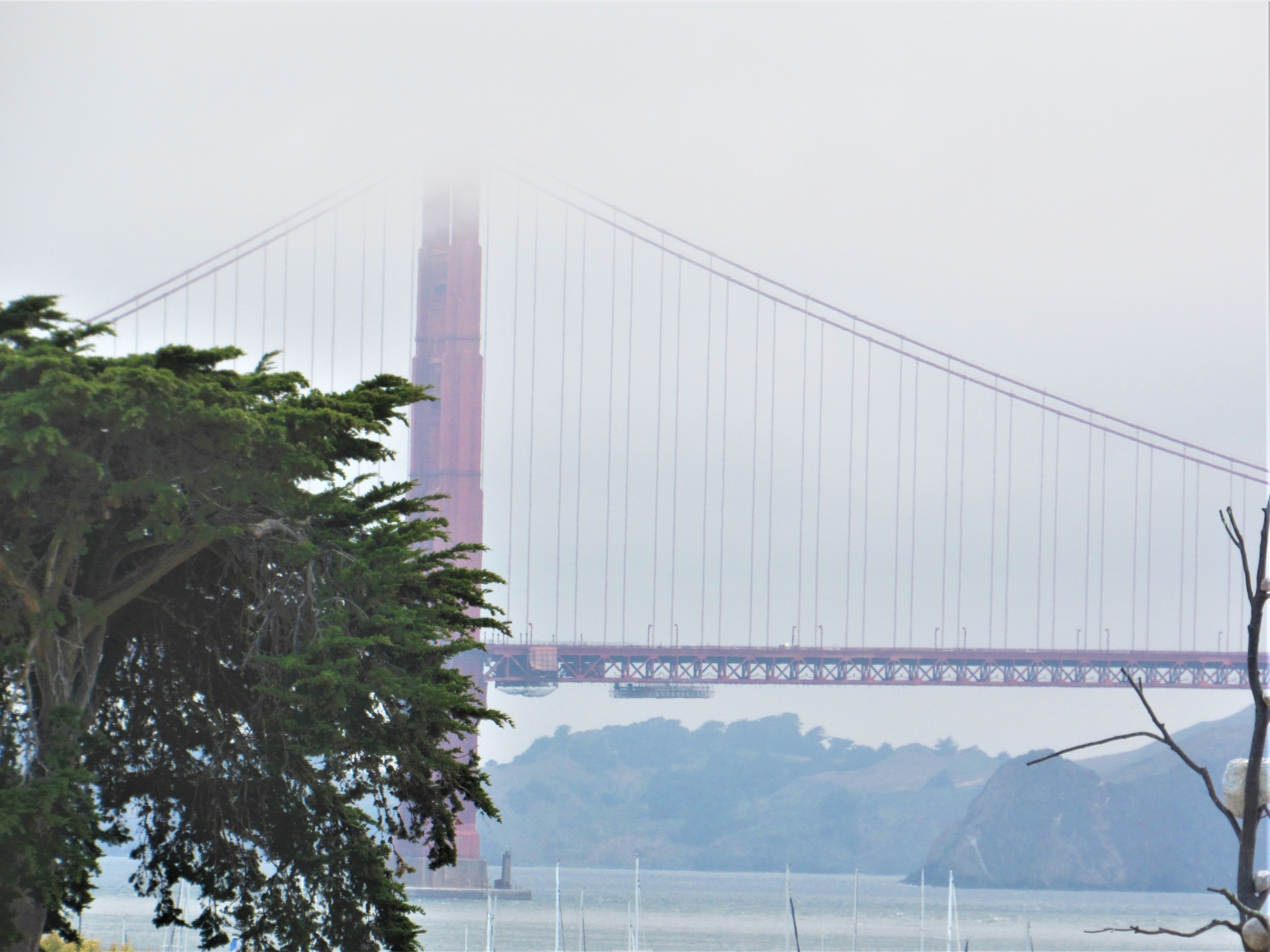 Bridge-in-fog
