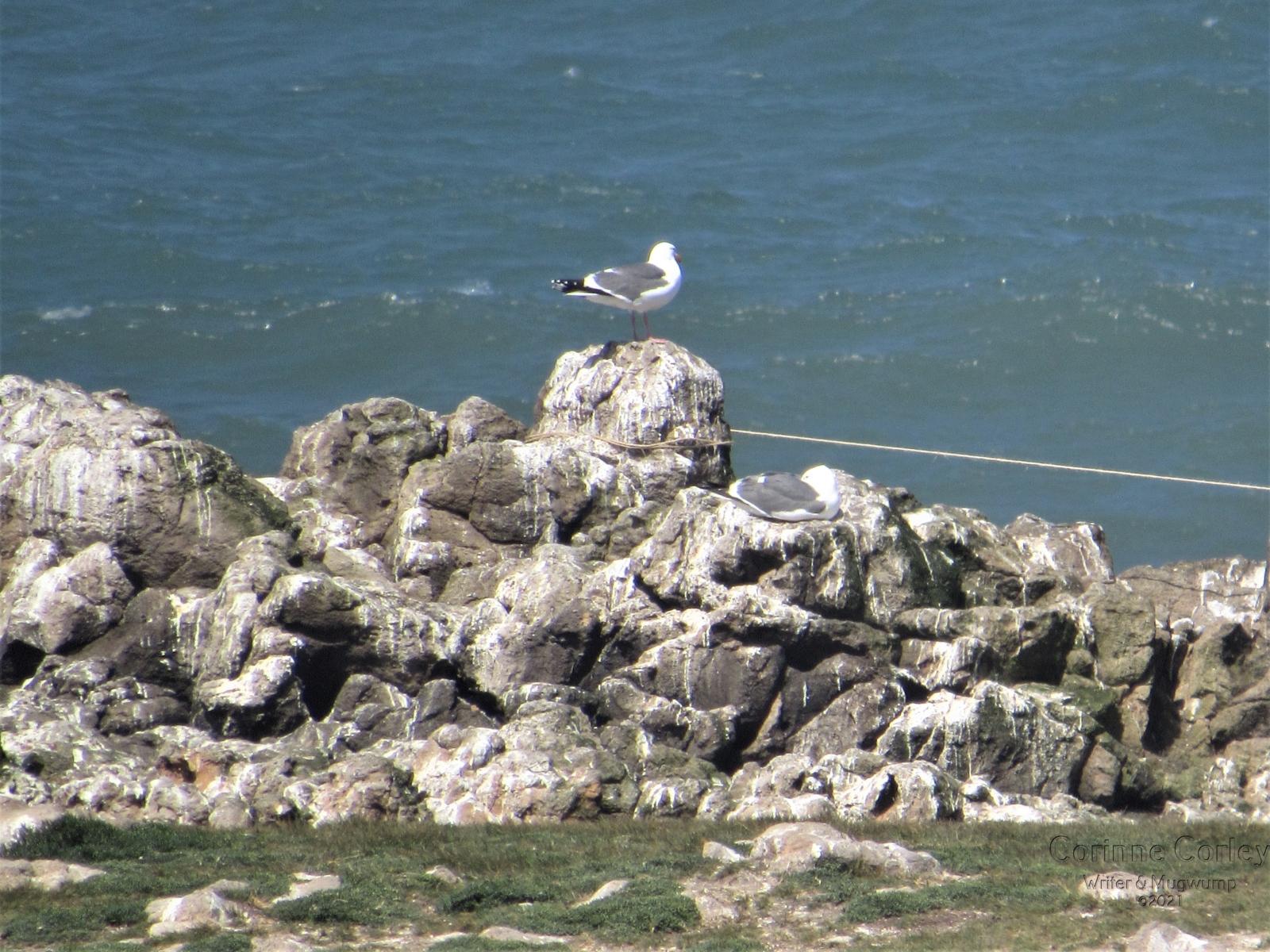 Atop-Gull-Rock