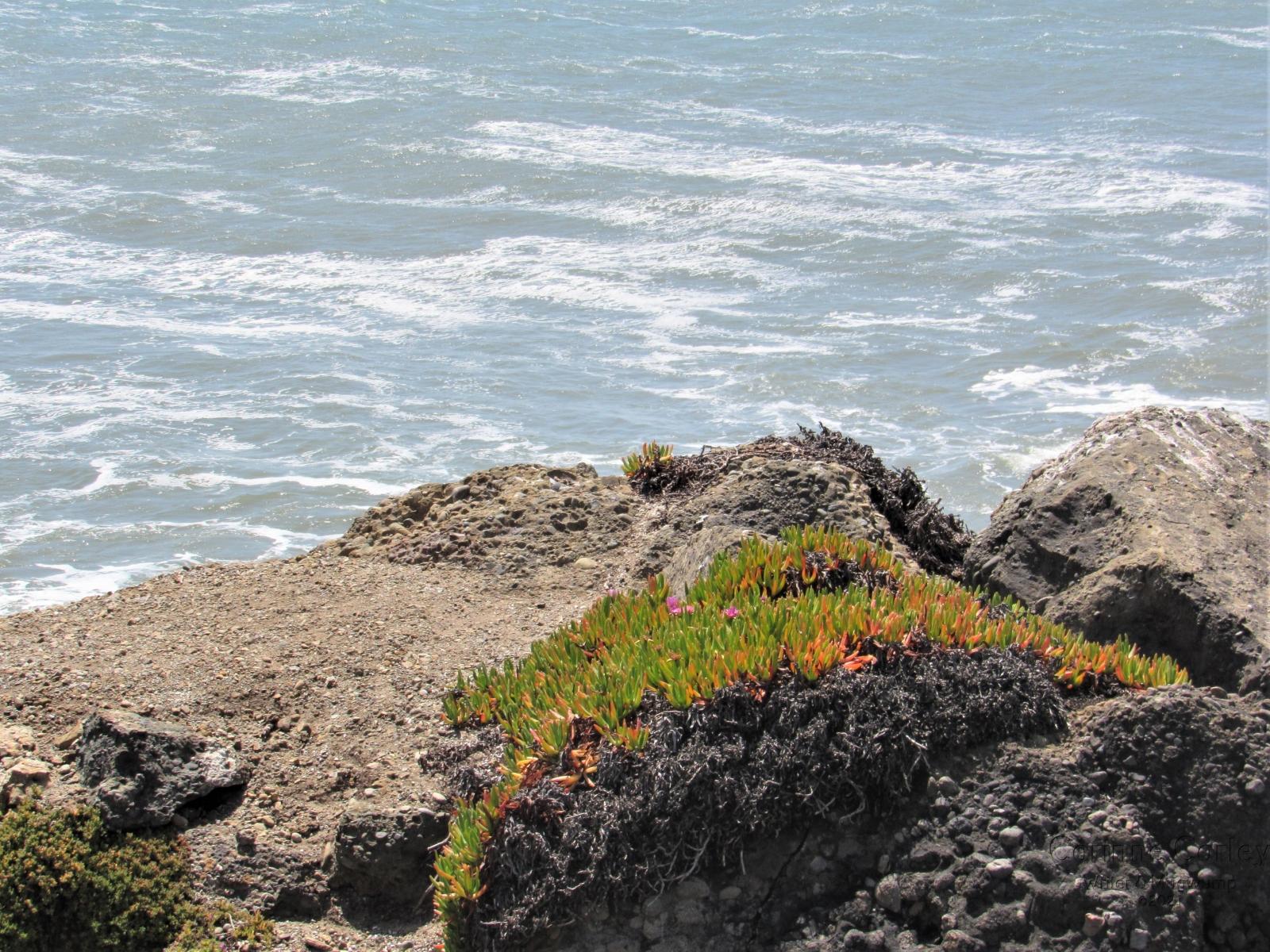 Coastal-flora