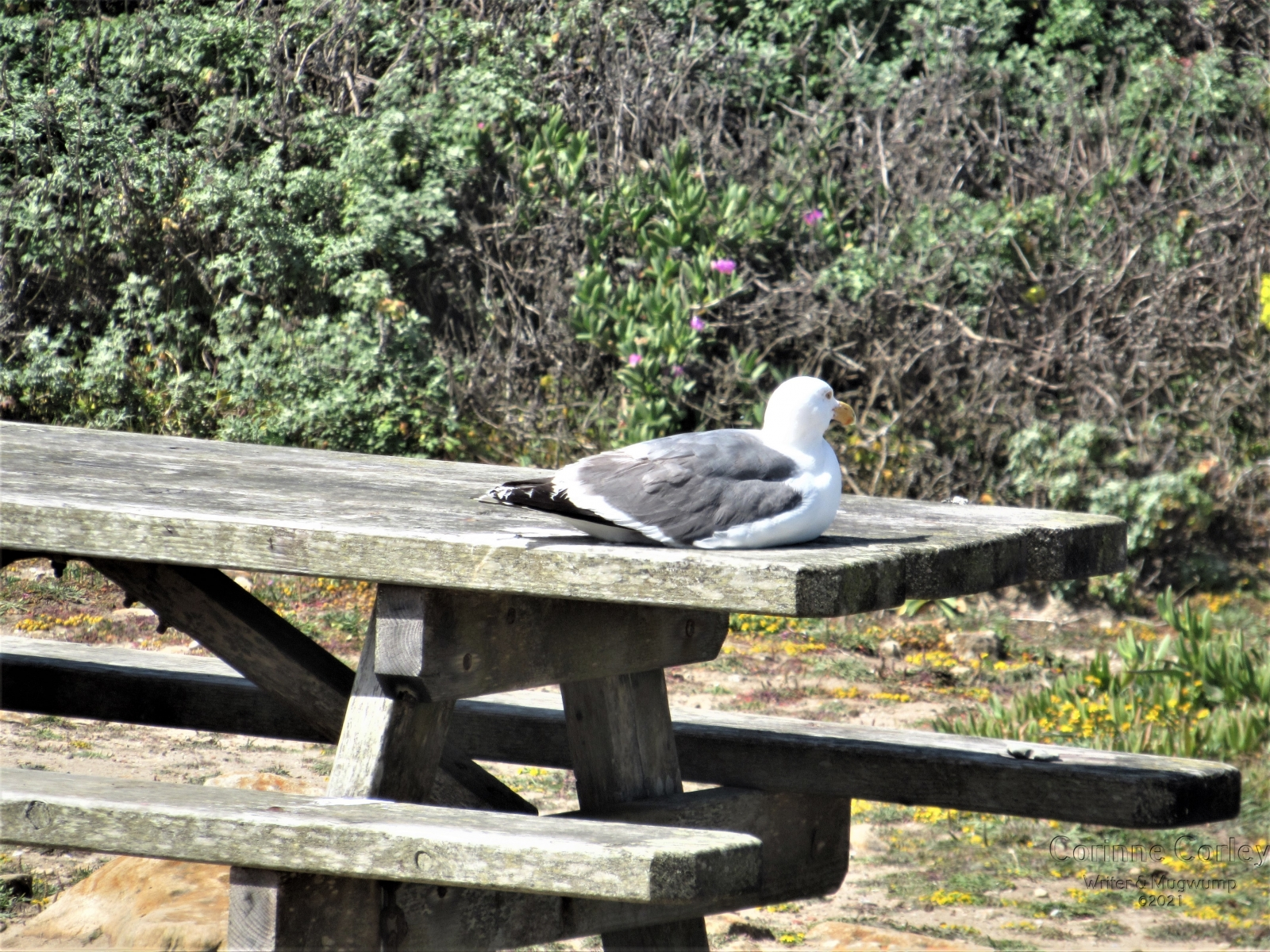 Gull-at-rest