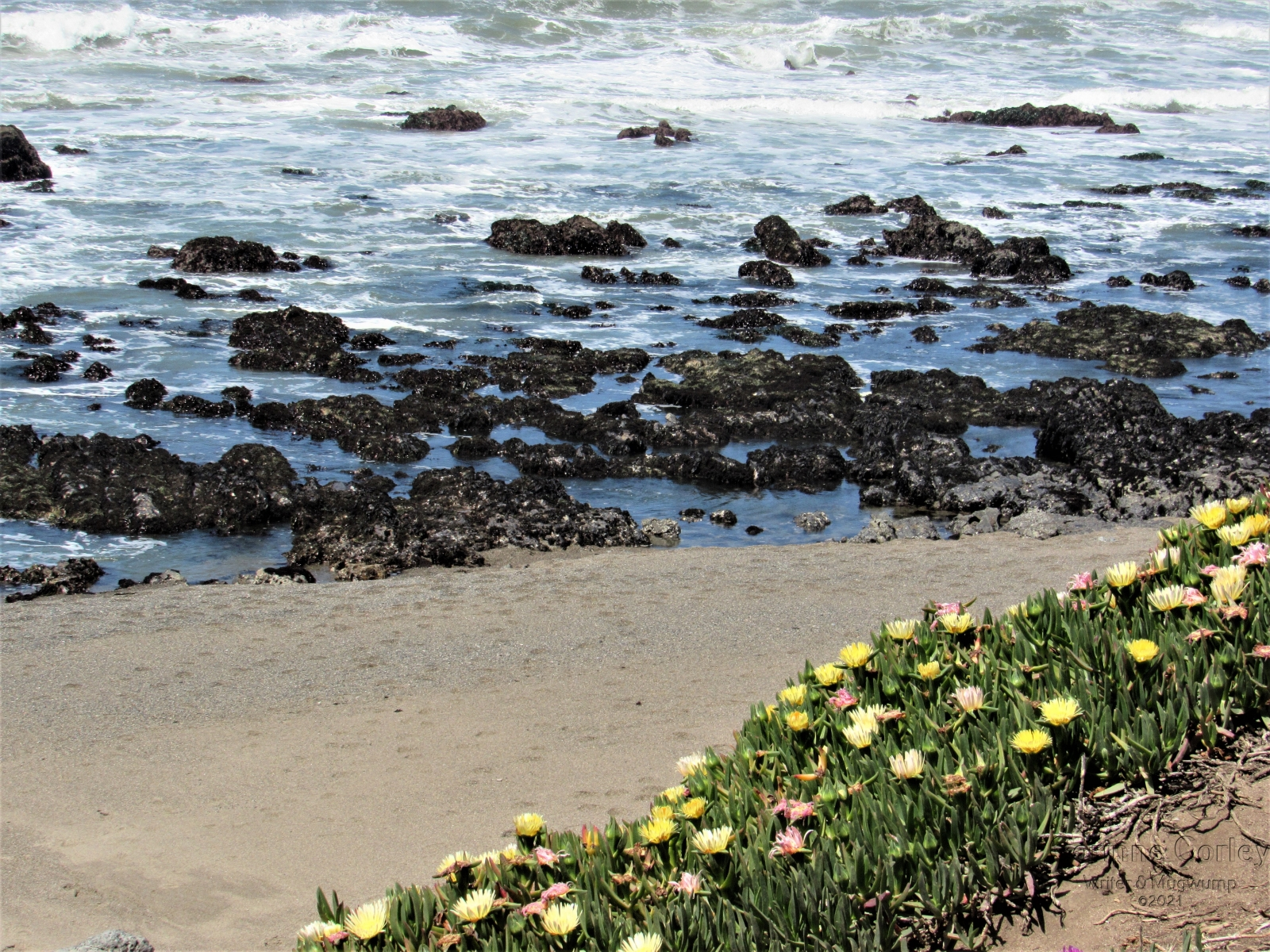 The-beach-at-Pigeon-Point