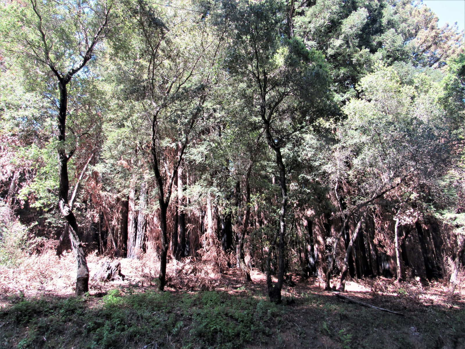 The-trees-and-the-forrest