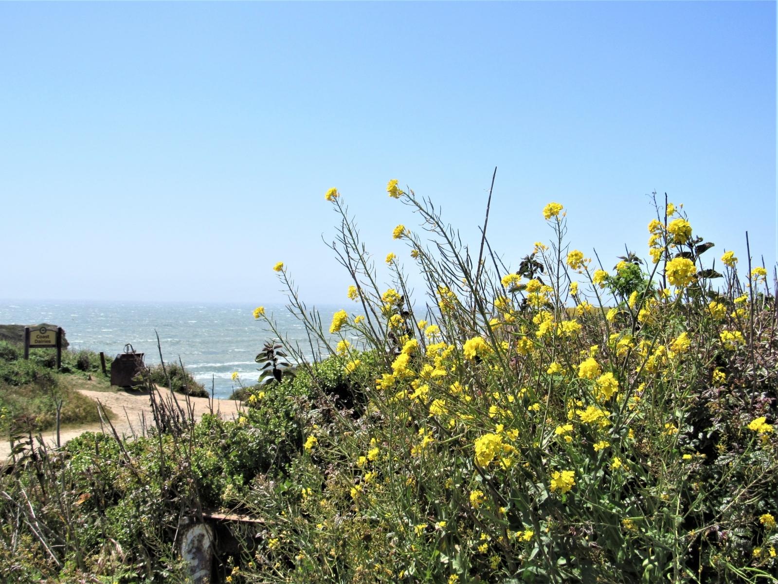 Wildflower-on-the-seashore