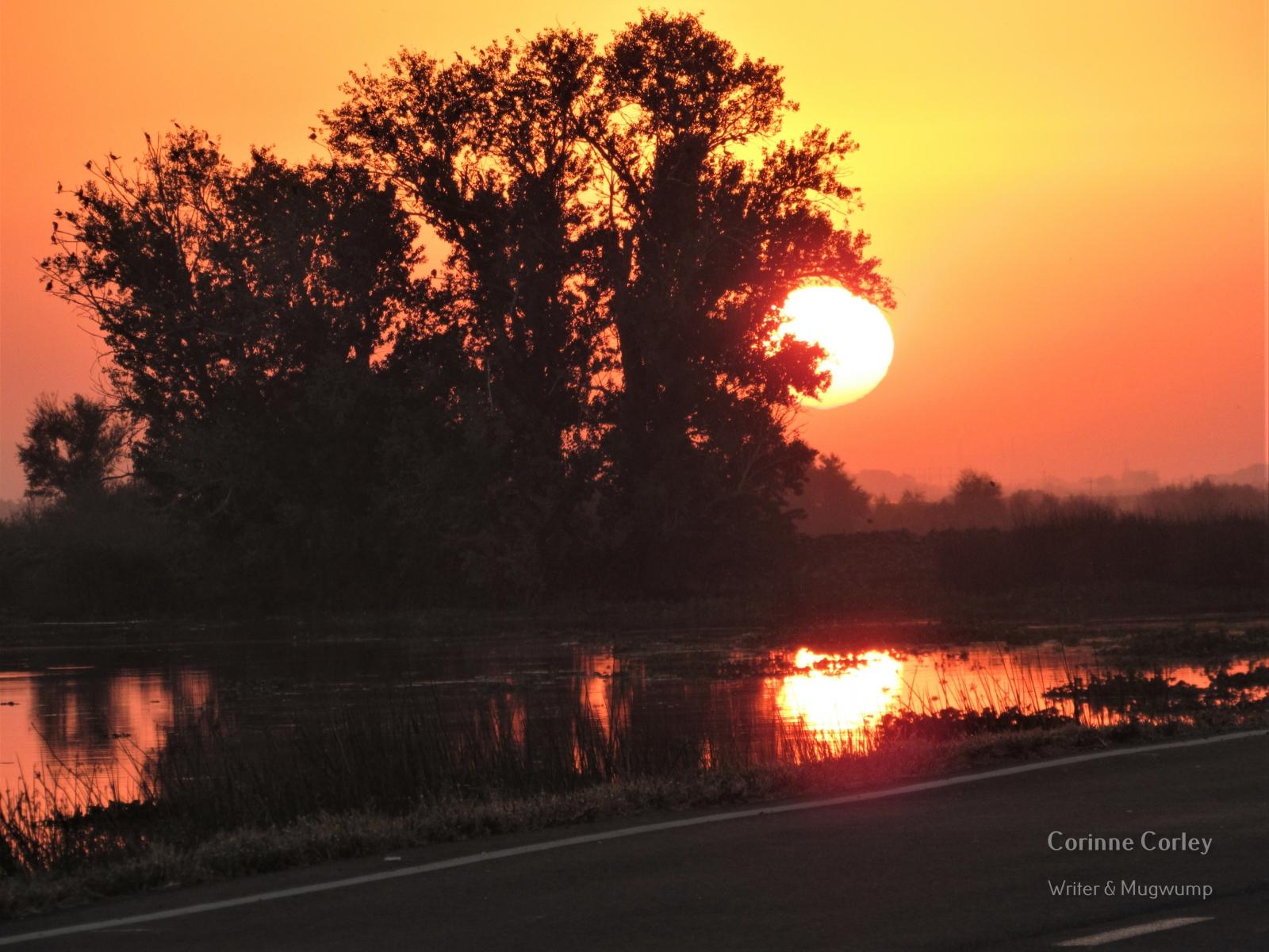 Delta-sunset-1