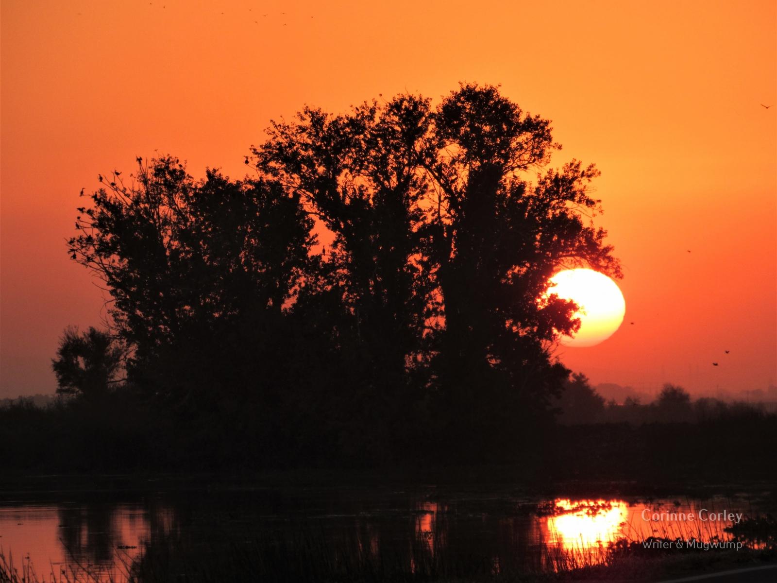 Delta-sunset-2