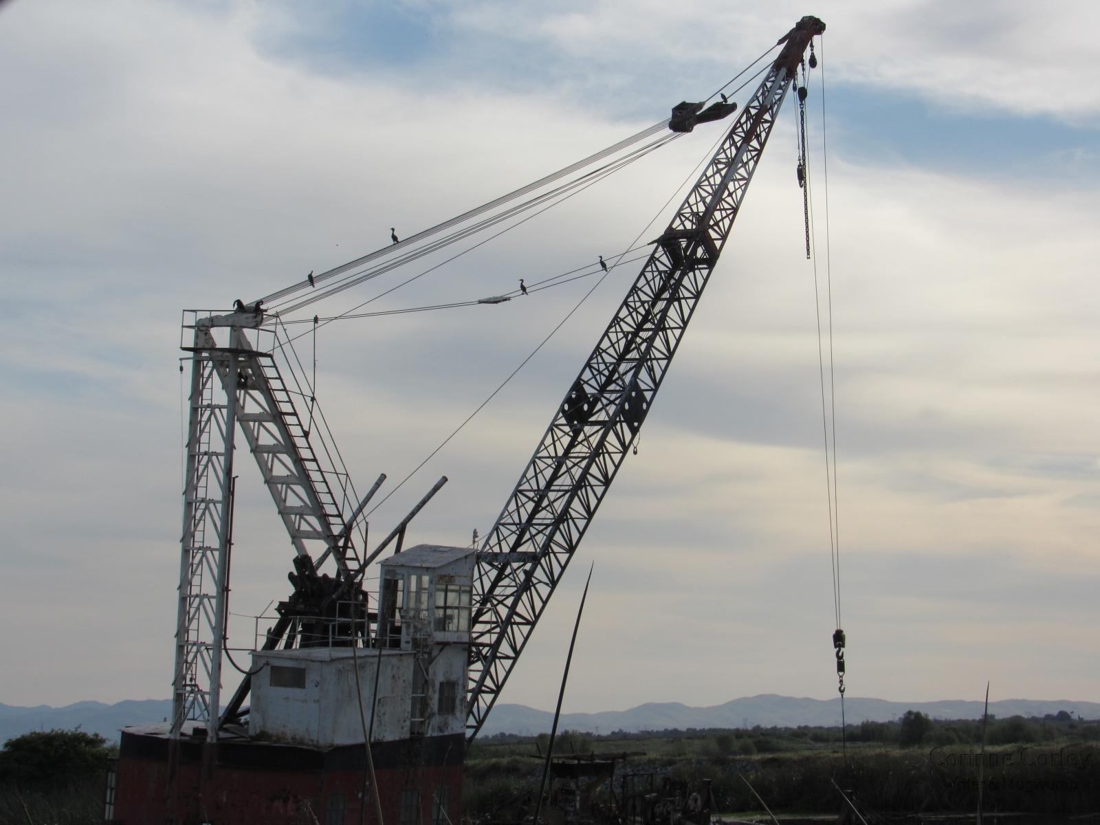Ducks-on-the-crane
