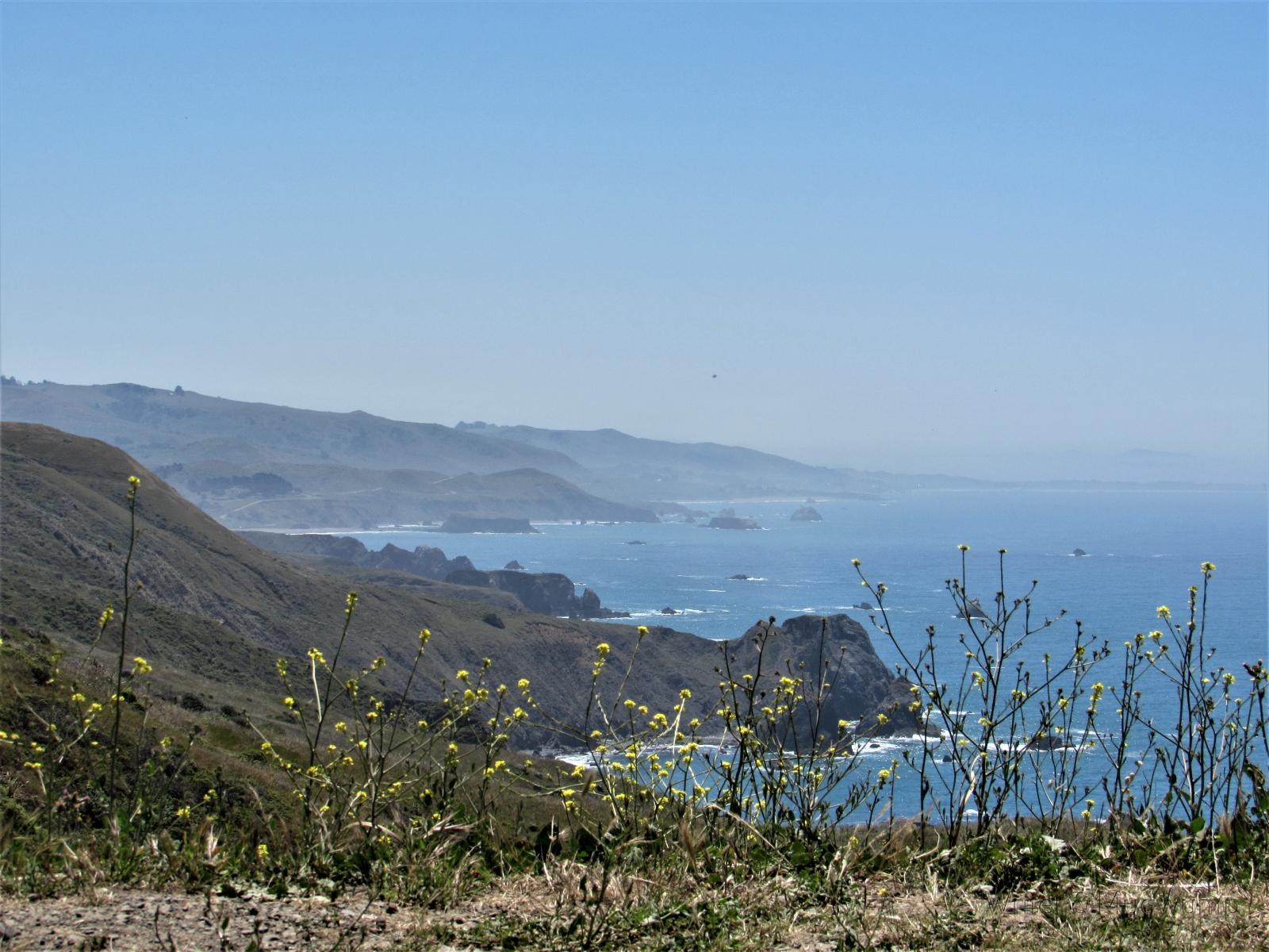 Misty-shoreline