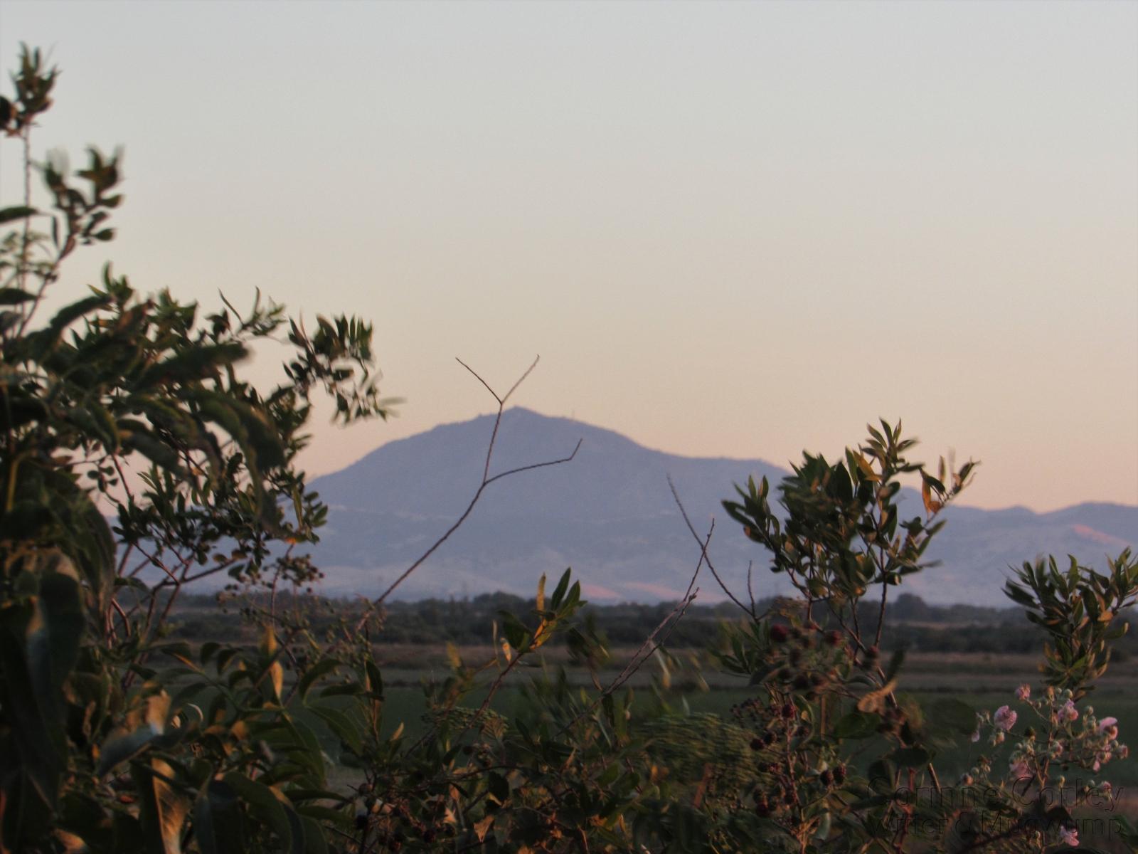 Mt-Diablo-from-Brannan-Island-Road