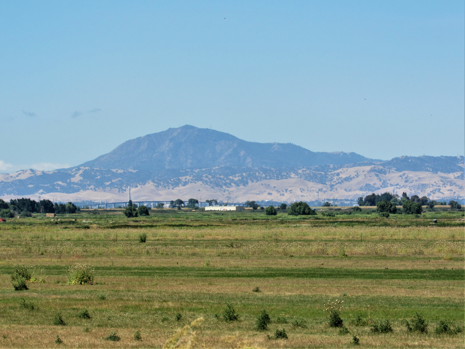 Mt-Diablo-from-Twitchell-Island-Road