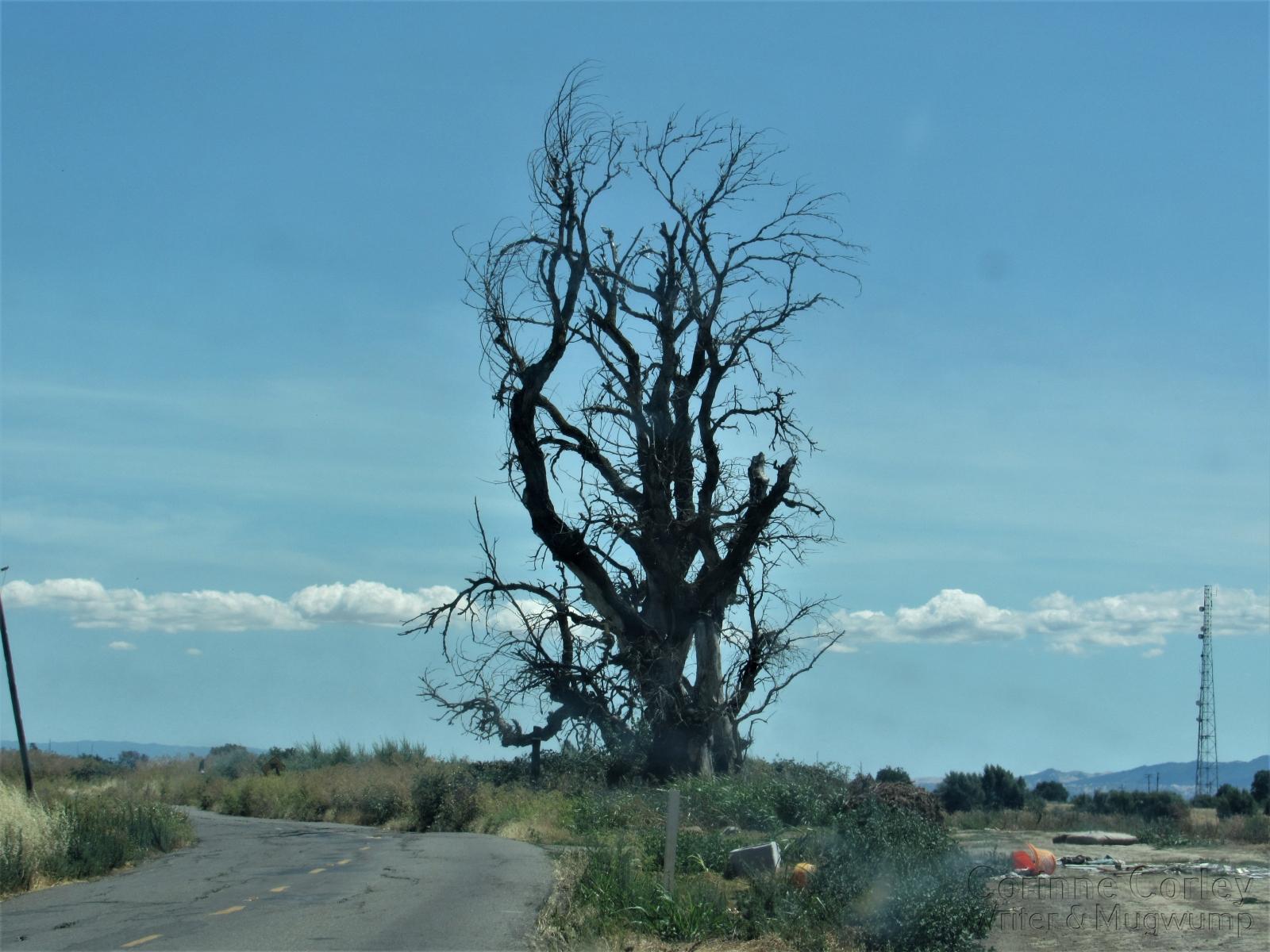 Old-Tree-on-Jackson-Slough