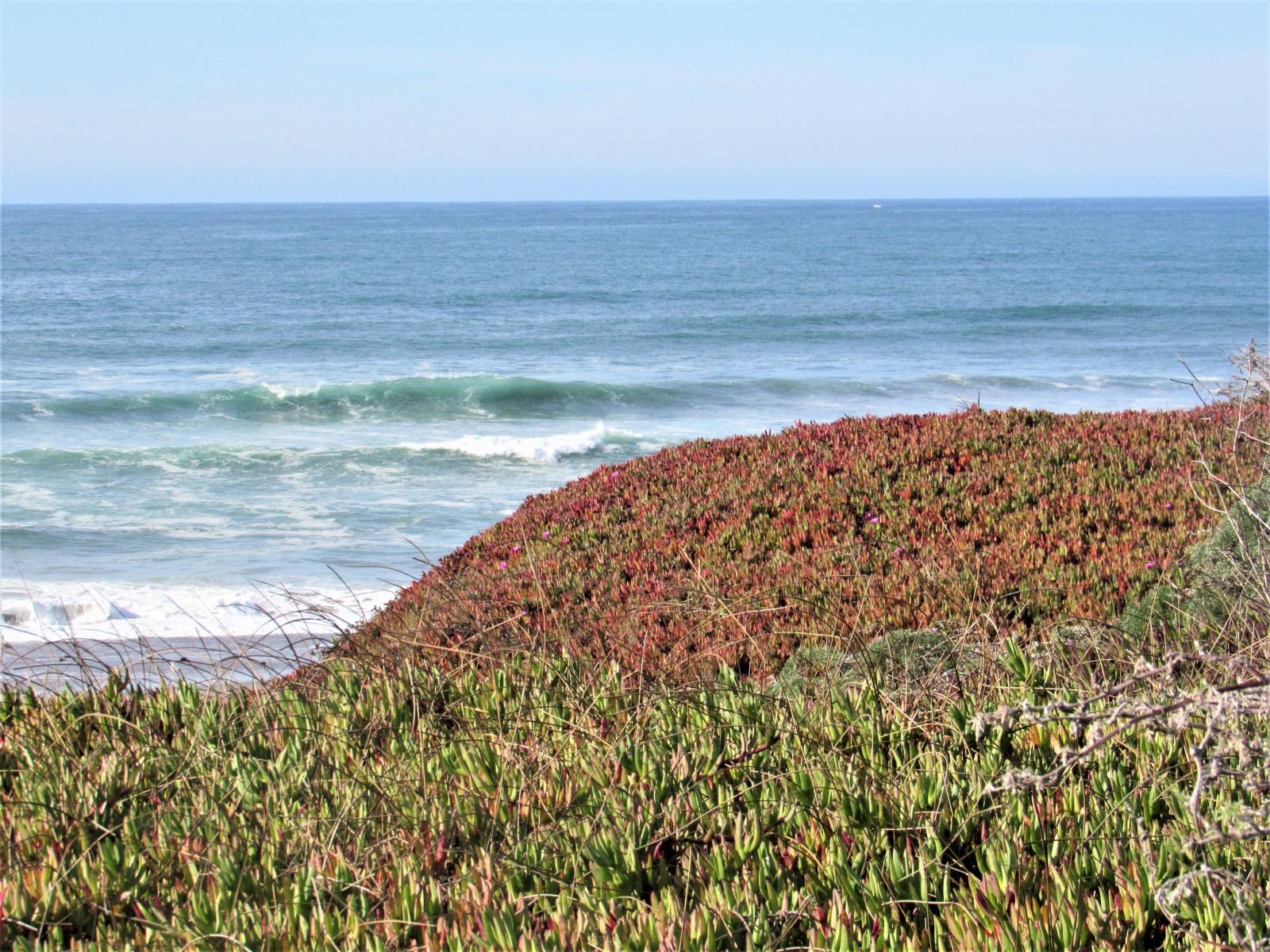 Ocean-hillside